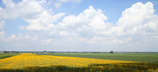 Yellow and green fields with clouds