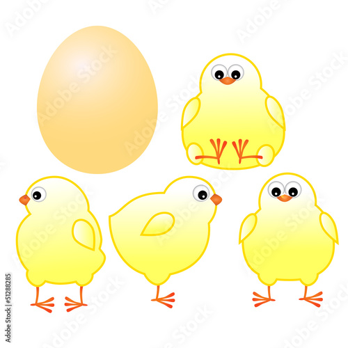 chicks with yellow egg