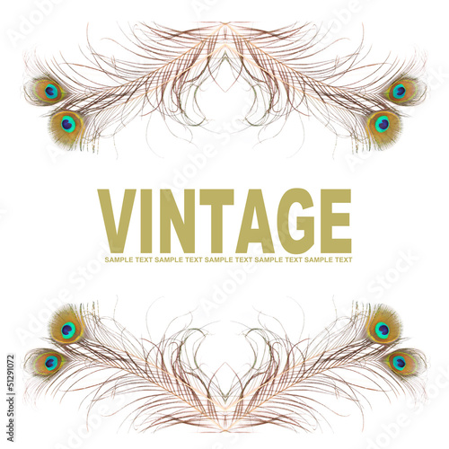 Vintage background from peacock feathers.