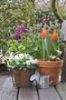 fleurs printanières en terrasse