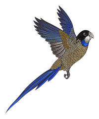 Parrot --- Northern Rosella