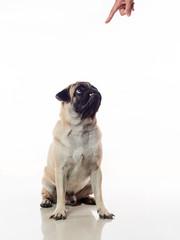 Sit dog