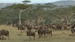 Herd of wildebeest migrating in Serengeti, Tanzania