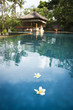 frangipani flowers bali spa pool