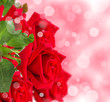 Red roses with bokeh background