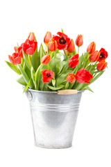 Colorful tulips in a bucket isolated on a white background