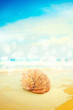 Seashell over sea bokeh background