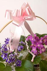 African Violets  - Basket gift