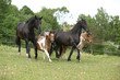 Batch of small and big horses running