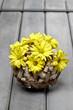 Floral spring composition