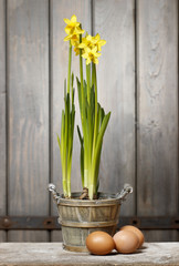Daffodils in basket on wooden background