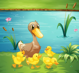 A mother duck with her ducklings in the river