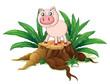 A pig above a trunk