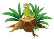 A green iguana above a trunk