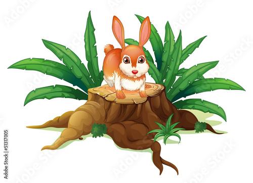 A rabbit above a trunk