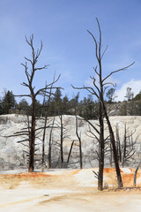 Yellowstone national Park 8