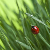 Ladybird on grass