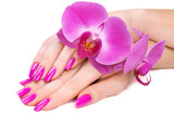 hands with pink orchid. isolated