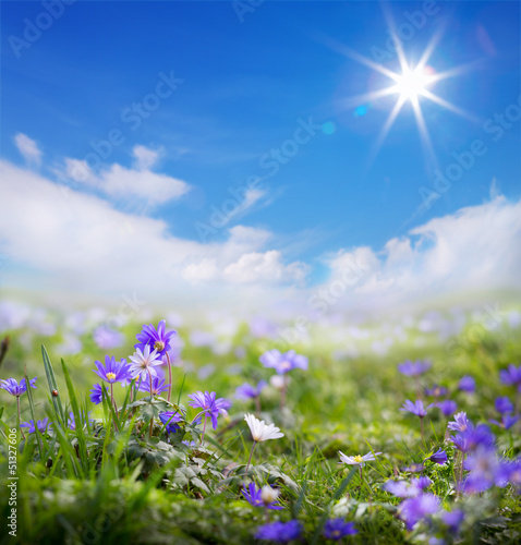 art floral spring or summer background