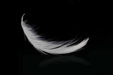 Flying white feather on black background