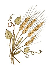Wheat hand drawn