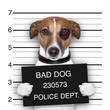 Obrazy na ścianę i fototapety : mugshot dog