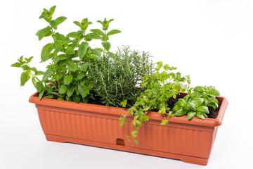 Erbe aromatiche - Aromatic herbs
