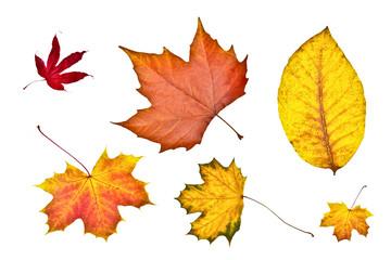 Unterschiedliche Herbstblätter