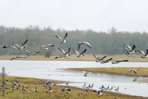 Flock of geese flying over a lake