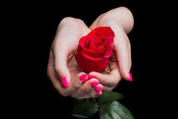 hands of girl carefully holding red rose on black