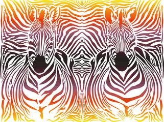 Zebra abstract pattern background