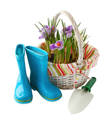 Child's little blue rubber gumboots with a shovel and crocus in