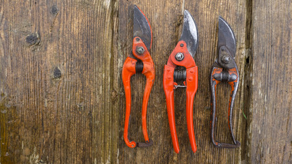 old and new pruner on wood