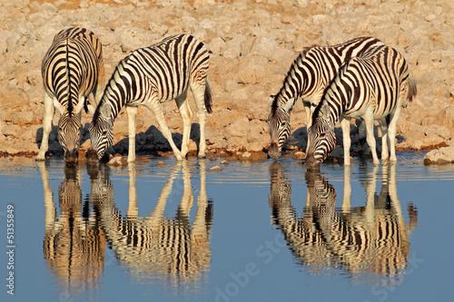 Plains woda Zebry pitnej, Etosha National Park