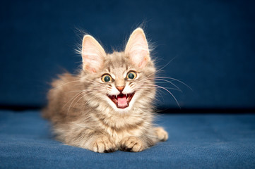 Pretty kitten on blue background