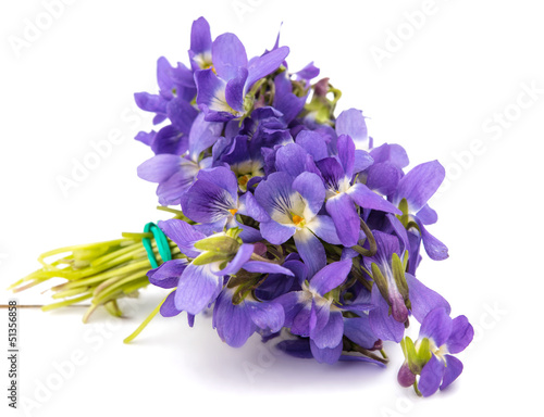 violet flower isolated