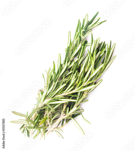 rosemary leaf isolated