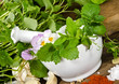 Gesunde Küchenkräuter, essbare Blumen und Gewürze