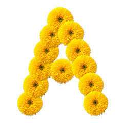 letter of the alphabet of flowers