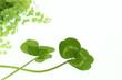 2種類のクローバーと緑のエコイメージ