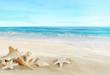 Leinwanddruck Bild - Landscape with shells on tropical beach