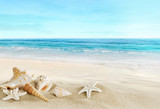 Fototapety Landscape with shells on tropical beach