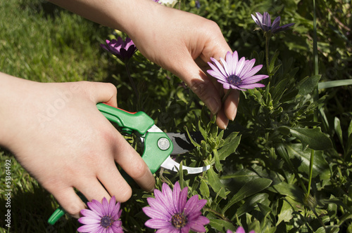 pruning a flower horizontal