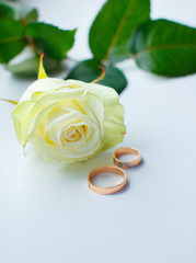 beautiful white rose and two gold wedding rings