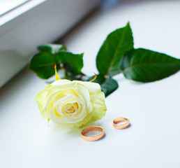 White rose and two gold rings