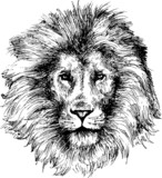 Lion head hand drawn - 51362451