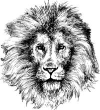 tête de lion tiré par la main