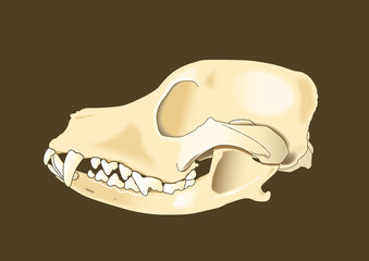 dog skull lateral