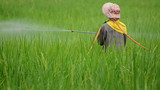 farmer spraying pesticide in rice farm poster