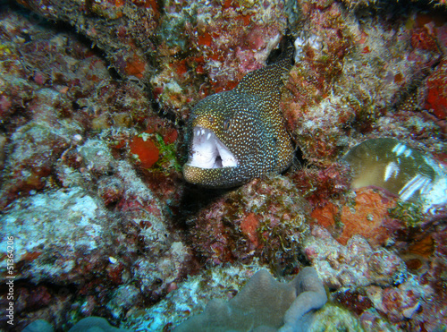 maldives - diving - moray